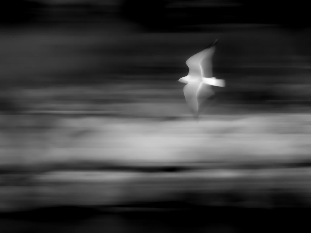 bird in flight by northy