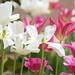 Full Bloom by sunnygirl