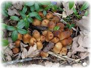 28th Mar 2021 - fungi