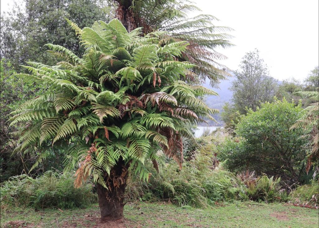 Old fern by sandradavies