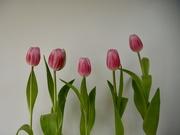 28th Mar 2021 - 28. Tulips 7