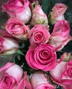 28th Mar 2021 - Pink roses
