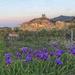 Laroque le Château & irises