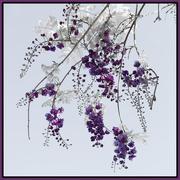 27th Mar 2021 - Purple 4 Saturday