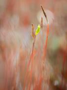 28th Mar 2021 - A sporophyte