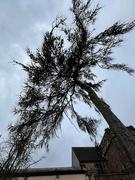 9th Mar 2021 - Unusual tree