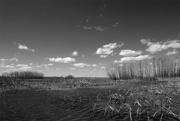 28th Mar 2021 - Wetlands