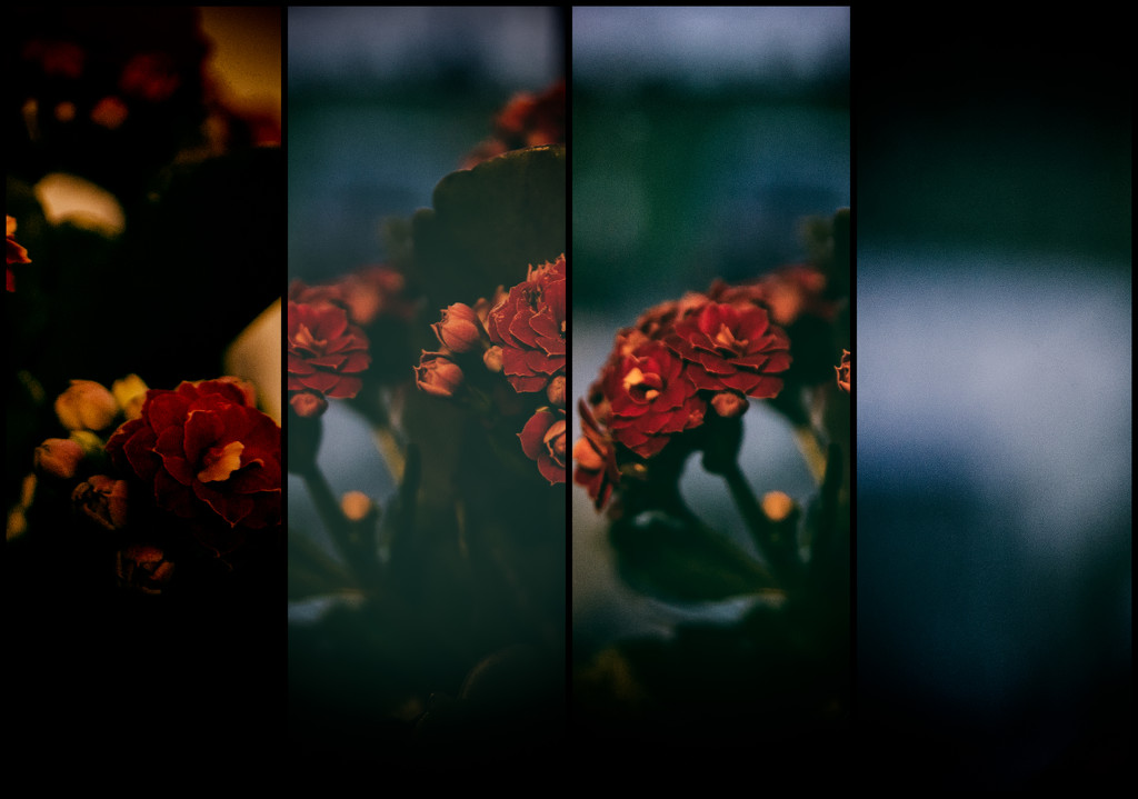Floral Panels by manek43509