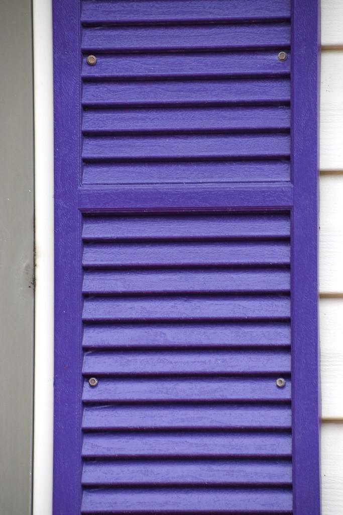RAINBOW2021 - Purple Window Shutter by bjywamer