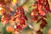 29th Mar 2021 - Suddenly it's autumn!