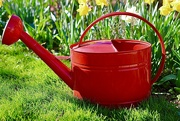 29th Mar 2021 - Red Watering Can