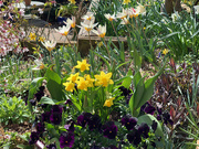 29th Mar 2021 - Back Garden