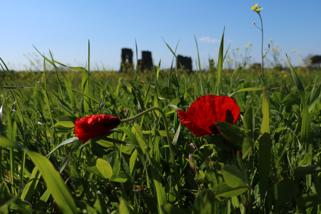 Spring by frappa77