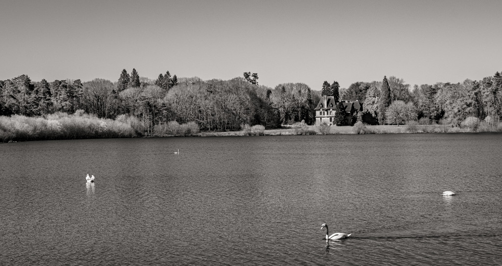 Four Swans... and a Château by vignouse
