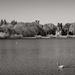 Four Swans... and a Château