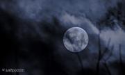 29th Mar 2021 - March Worm Moon