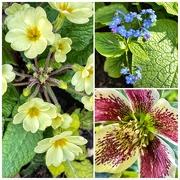 30th Mar 2021 - Doing a bit of gardening