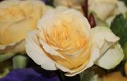 31st Mar 2021 - Yellow rose