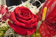 31st Mar 2021 - Red Rose