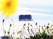 31st Mar 2021 - dandelion sun