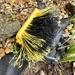 Yellow #2