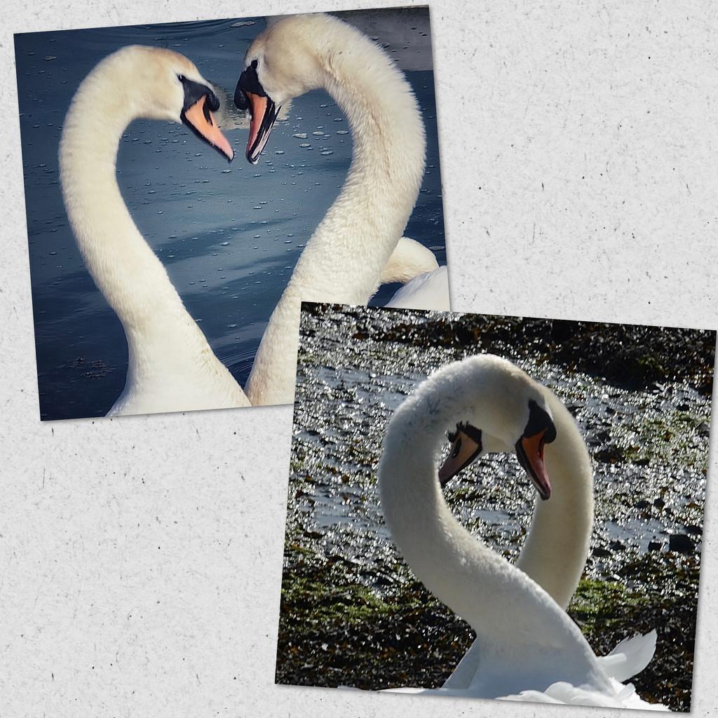 Love is..... by wakelys