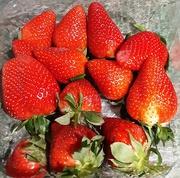 31st Mar 2021 - Strawberry fayre.