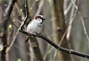 31st Mar 2021 - Mr Sparrow
