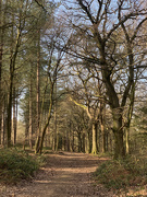 31st Mar 2021 - A Walk in the Woods