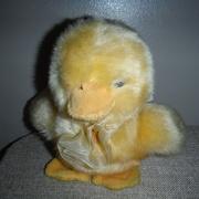 31st Mar 2021 - Fluffy Yellow Chick