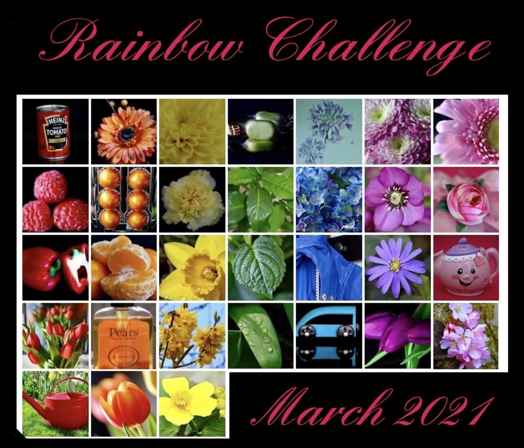Rainbow Challenge 2021 by carole_sandford