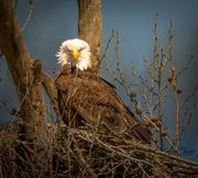 31st Mar 2021 - Eagle Eye