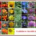 Rainbow Month Calendar