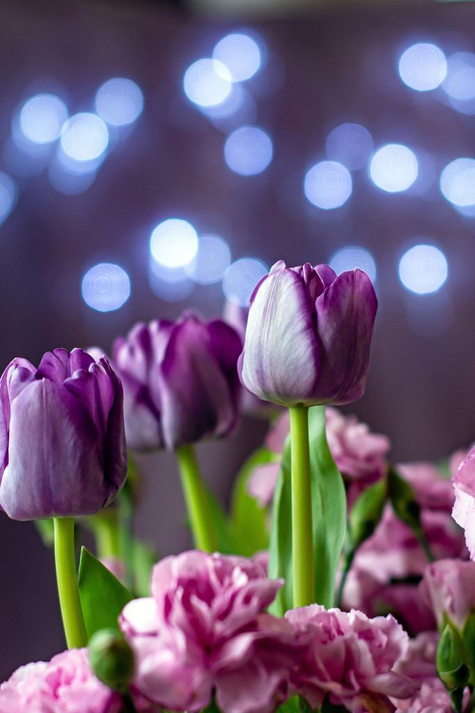 March Words - Bokeh Purple by farmreporter