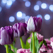 March Words - Bokeh Purple