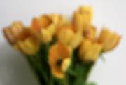 31st Mar 2021 - blurred tulips