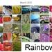 rainbow month