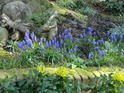 2nd Apr 2021 - spring flowers