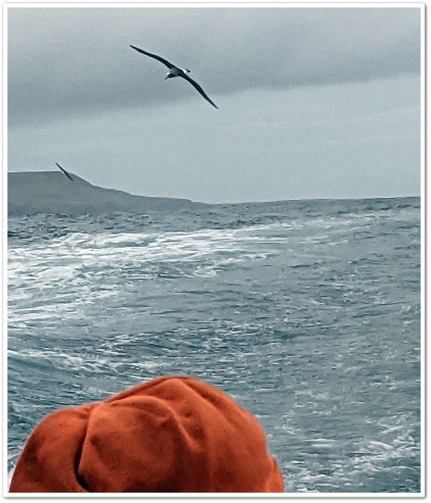 Birds, sea and orange beanie by sandradavies
