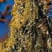Moss In Tree