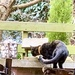 Extras - Cat on the bird table