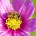 Enjoying The Flowers DSC_5940 by merrelyn