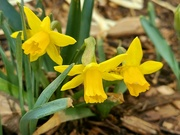 1st Apr 2021 - Spring is Here!