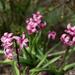 A flower sprang, lilylike, more brilliant