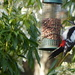 An easy meal for a Woodpecker. by snowy