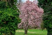 2nd Apr 2021 - Green & Pink