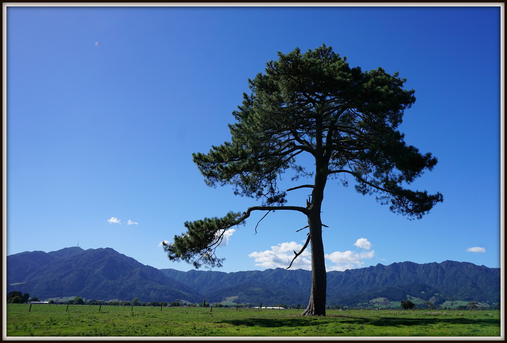 The Kaimai Ranges by dide