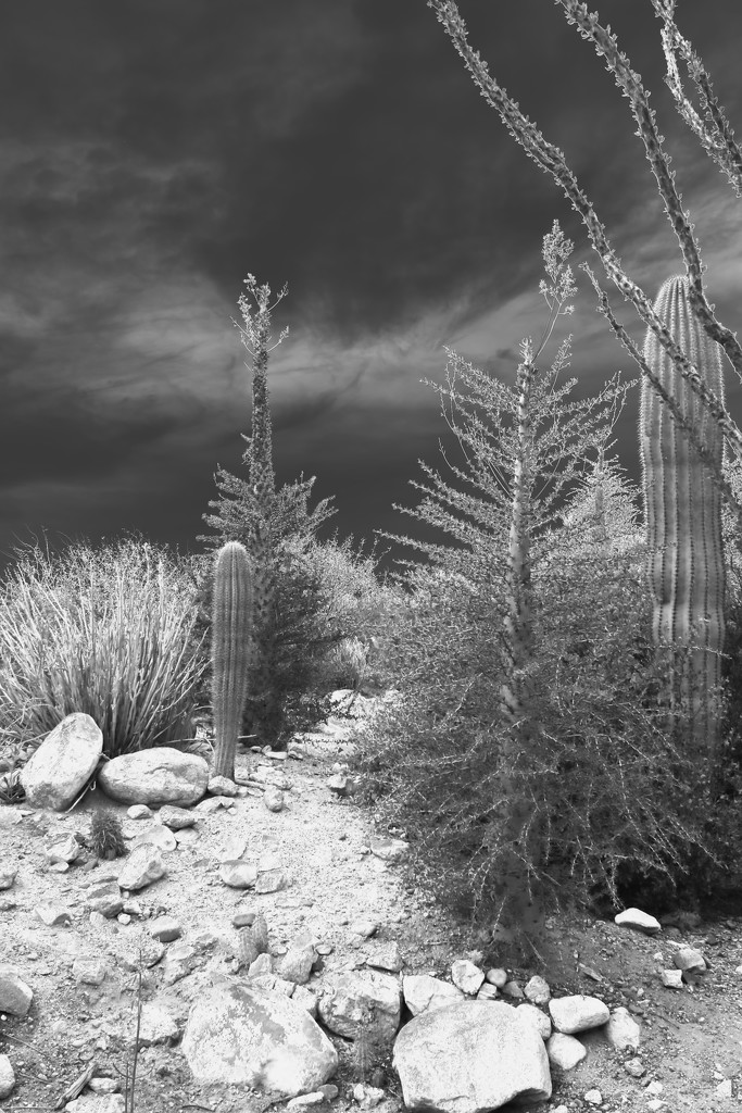 Boojum trees and saguaros  by blueberry1222