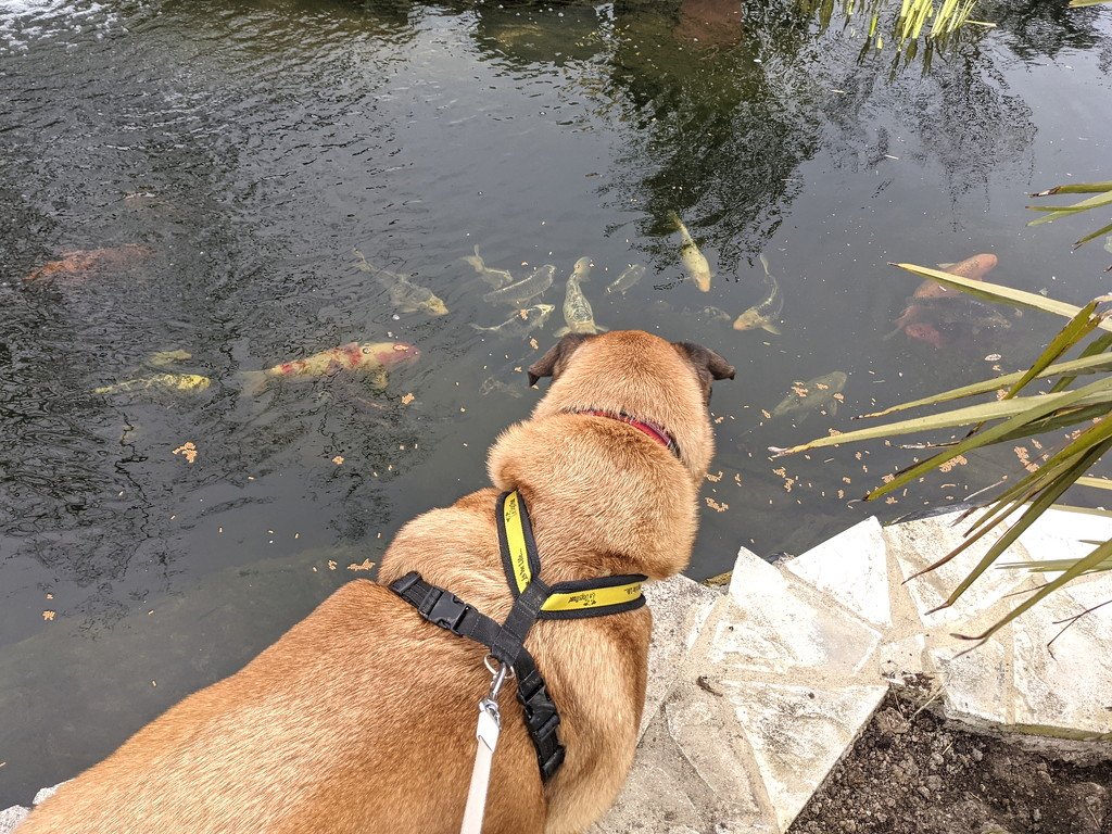 Watching the Fishes by bulldog
