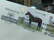 1st Apr 2021 - Thoroughbred horse?